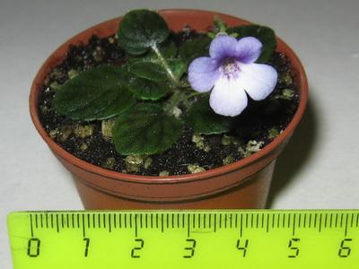 Маленькие комнатные цветы